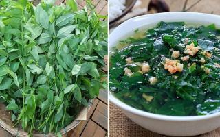 3 sai lầm tai hại khi ăn rau ngót gây hại cho cơ thể, nhiều người Việt không biết mà tránh